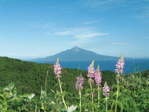 45-04利尻富士とレブンシオガマ