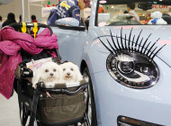 ペット業界に携わる方、動物好きの方必見【インターペット】(人とペットの豊かな暮らしフェア)