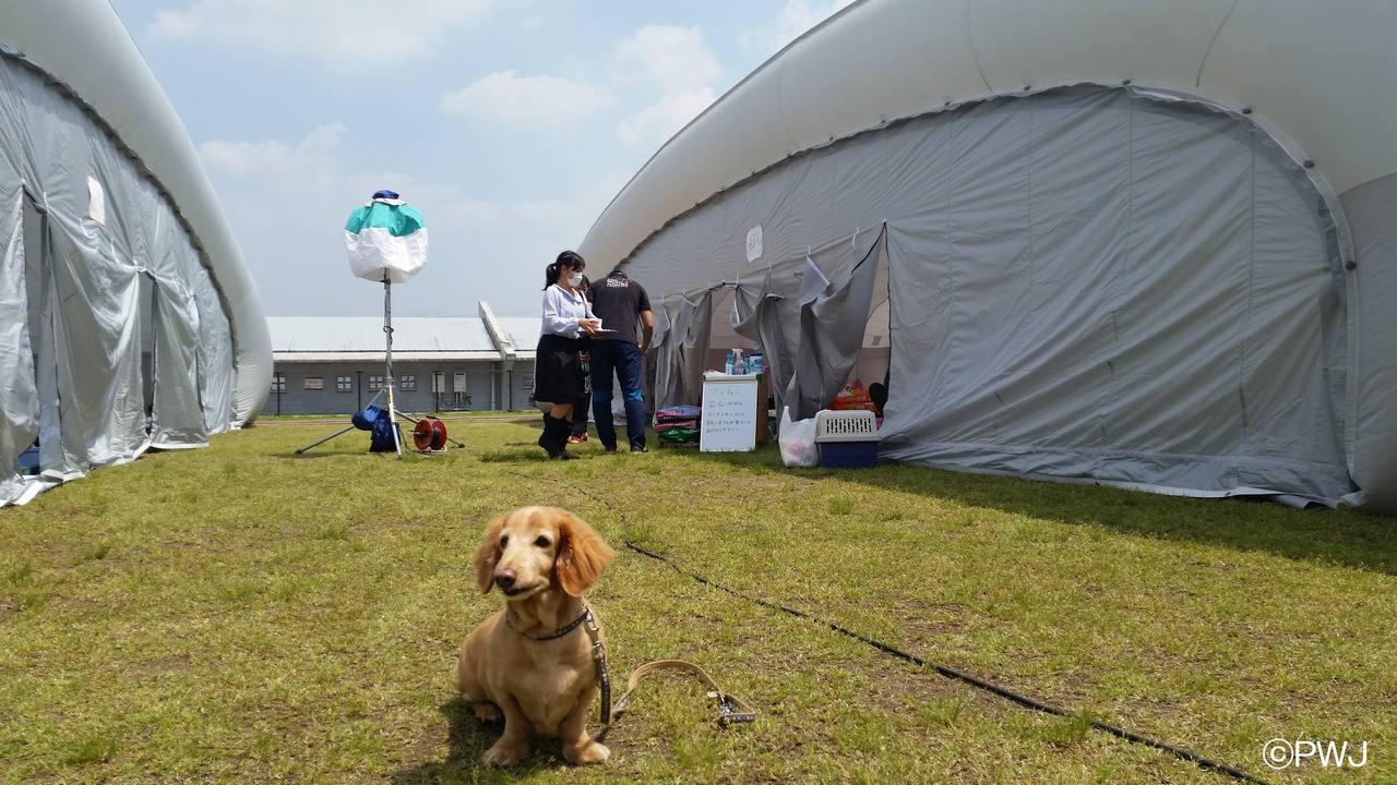 ペット同伴世帯用の避難所運営にご支援を