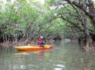 【鹿児島県・奄美大島住用】マングローブのカヌー体験!