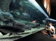 岐阜観光名物!世界最大級の淡水魚水族館「アクア・トトぎふ」