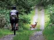 北海道 道北林道 自転車ツーリング