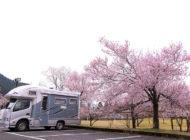 淡墨桜で名高い、うすずみ桜の里ねお